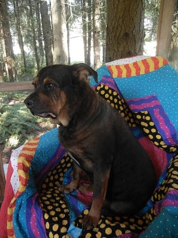 LILALOU IN TREEHOUSE ON FREDDY QUILT!