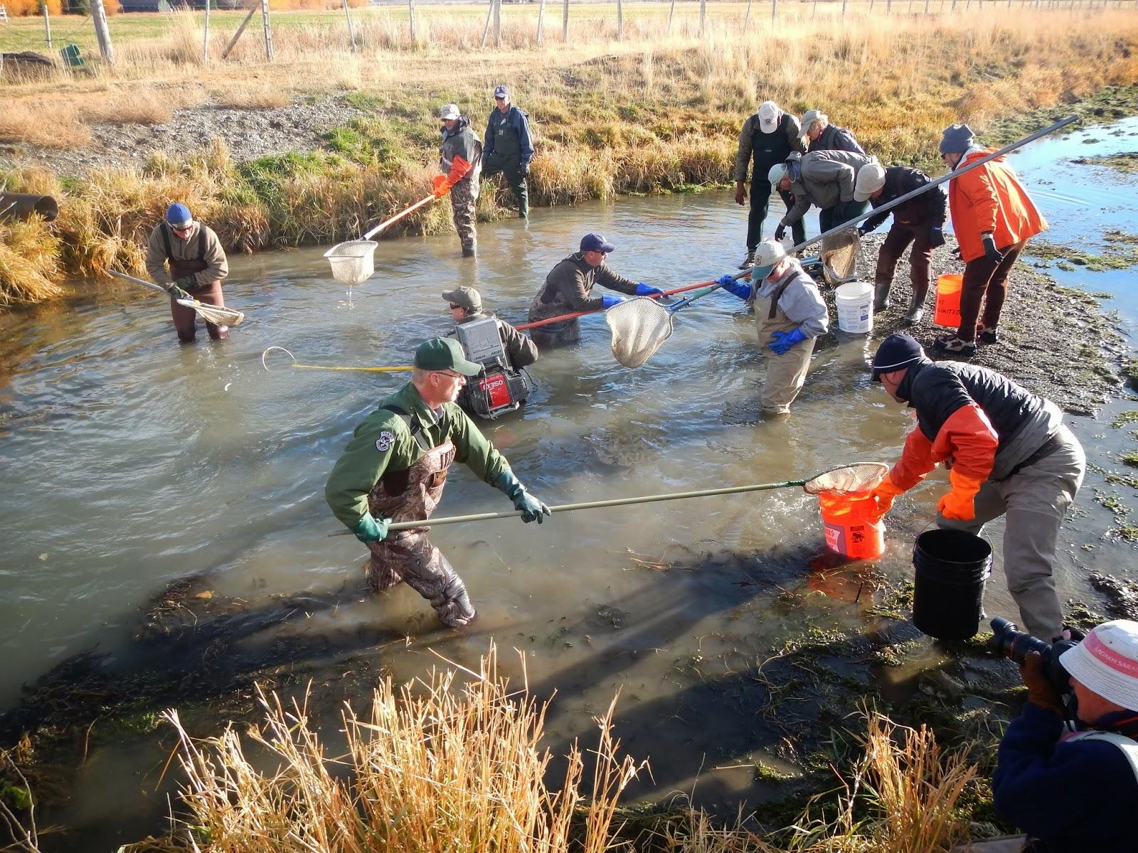 Idaho nature notes moving fish at silver creek an for Silver creek idaho fishing