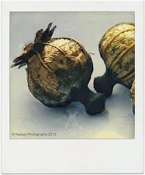 seeds poppy