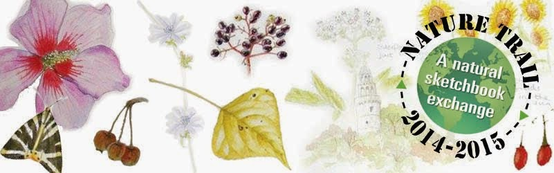 Nature Trails 2014  - A Natural Sketchbook Exchange