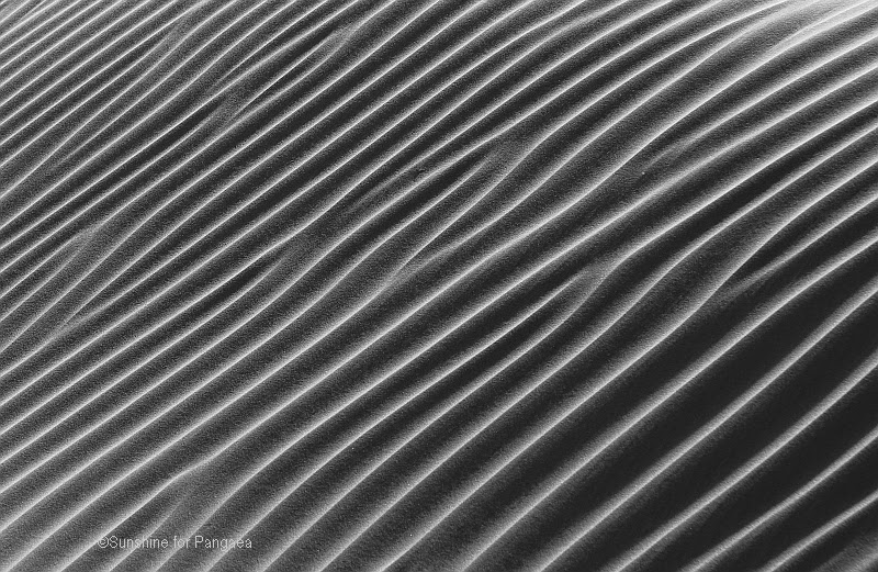 Sanddune black and white photography
