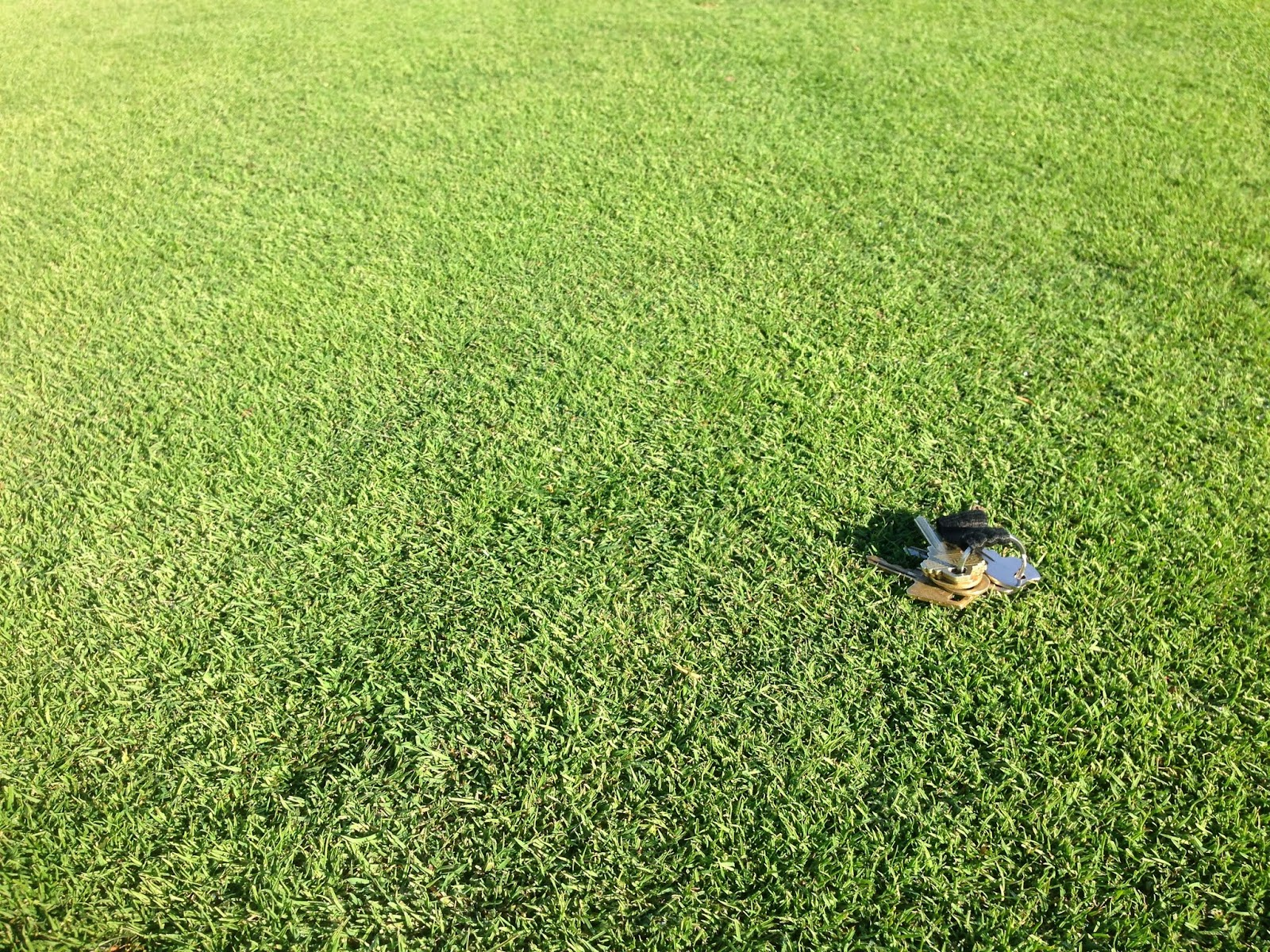 transitioning the poa out of fairways a progress report