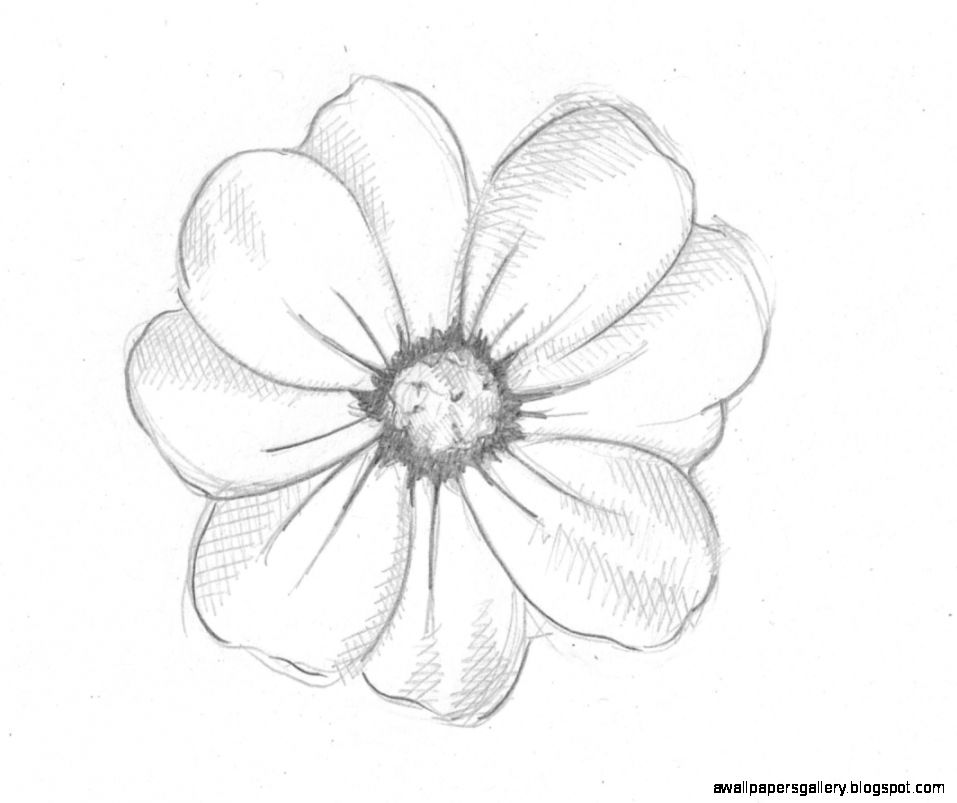 Cute Flower Drawings In Pencil | Wallpapers Gallery
