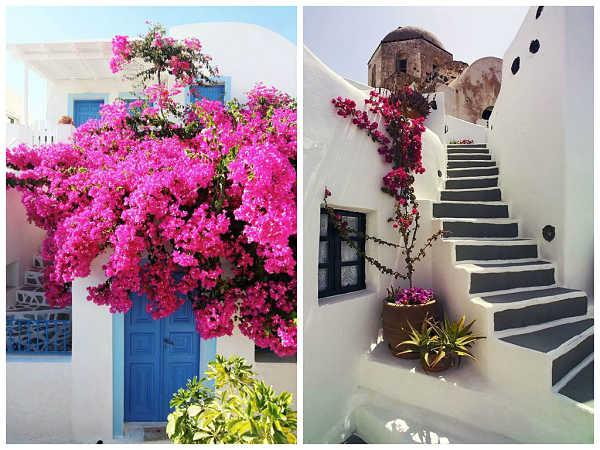 Buganvillas en la paradisiaca grecia oasisingular - Fotos de buganvillas ...