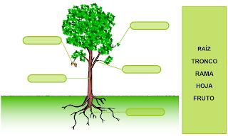 http://www.primerodecarlos.com/SEGUNDO_PRIMARIA/enero/tema1/actividades/CONO/plantas1.swf