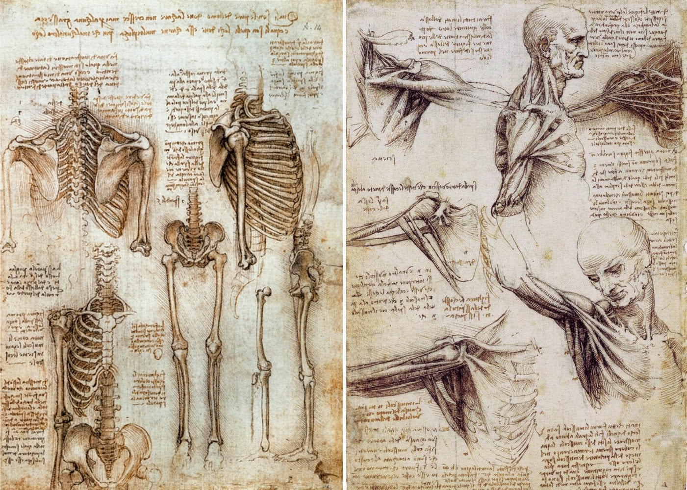 11th Of February Brief History Of Anatomical Illustrations Iii