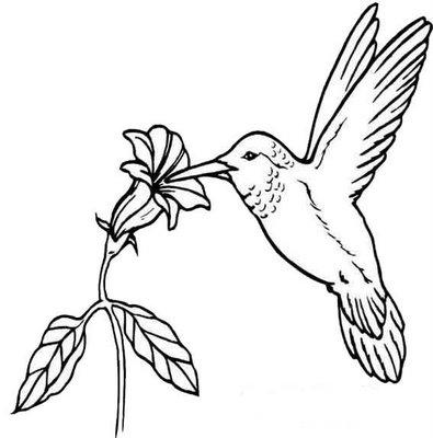 Desenhos Preto e Branco Lindos Beija-Flor em lindas Flores Colorir