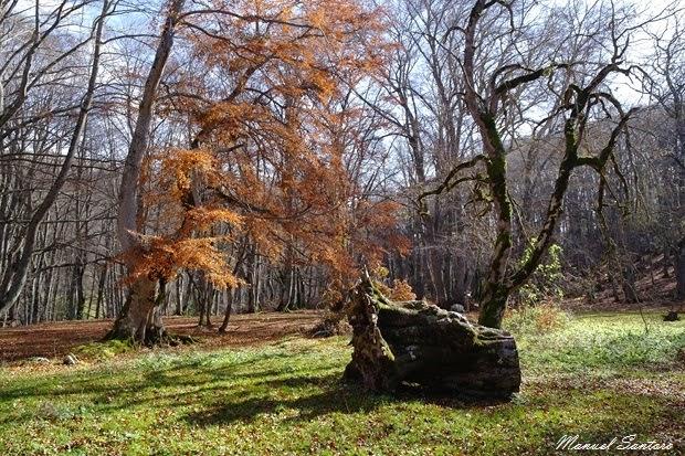 Pescocostanzo, bosco di Sant'Antonio