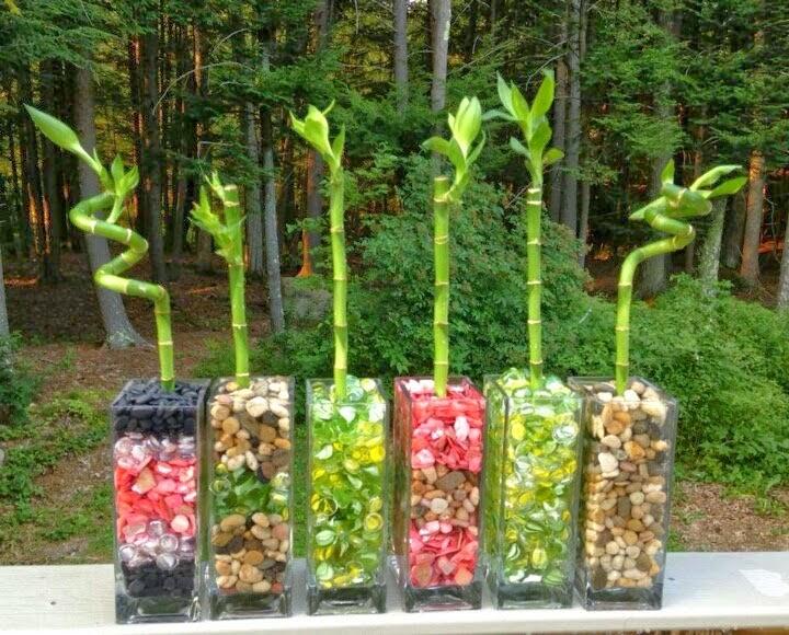 Bamb de la suerte saboreando mi jard n - Donde colocar fuentes de agua segun feng shui ...