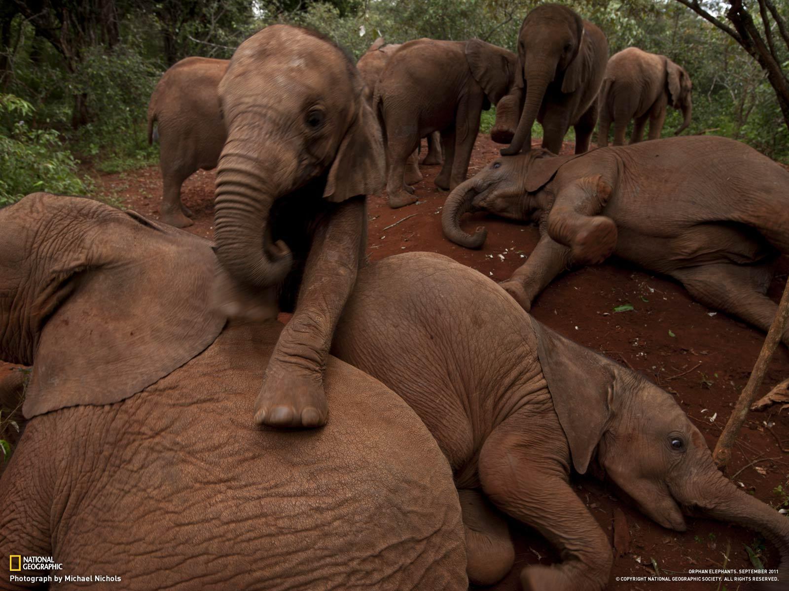 Слоныв природе секс 8 фотография