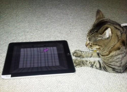 Набор игр для котов