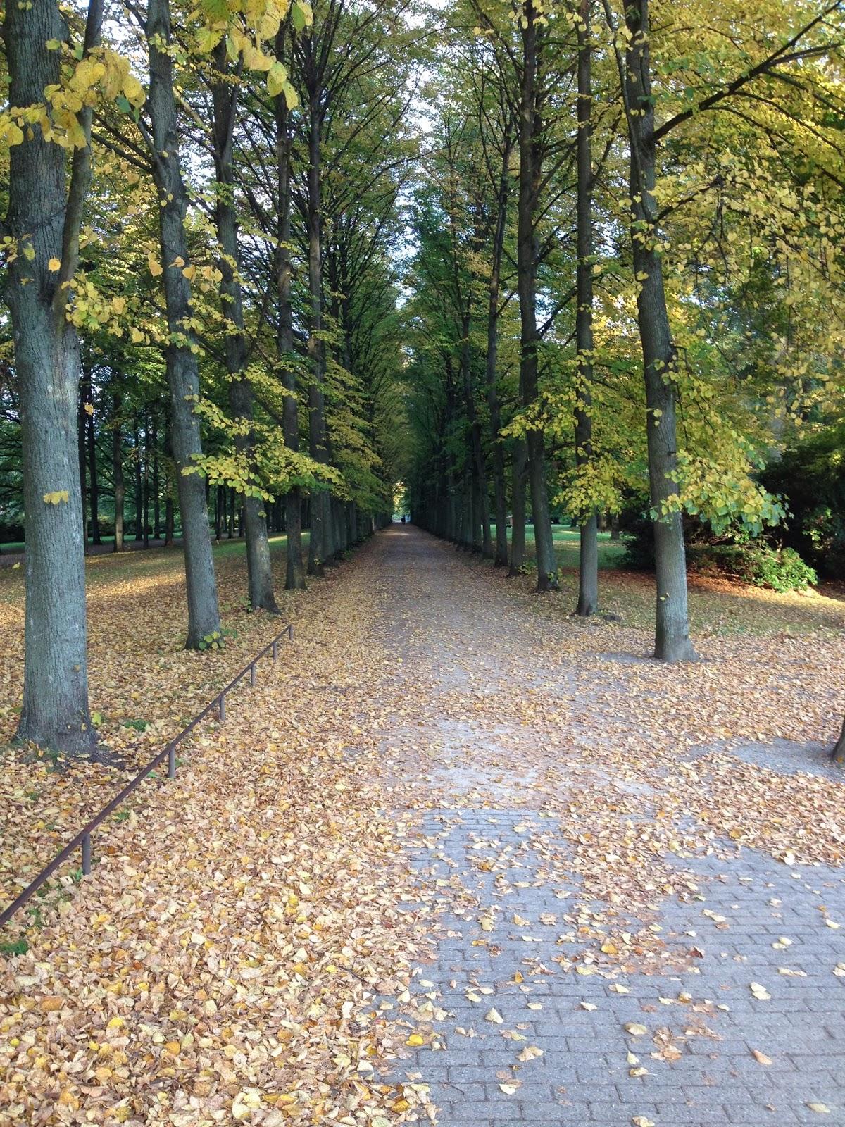 Allee, Bäume, Herbstlaufb auf Boden