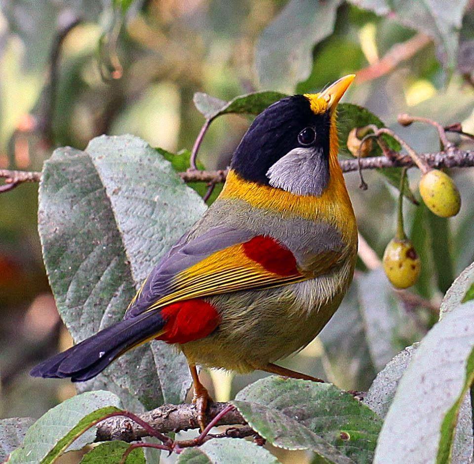 Ptáci jsou krásní a užiteční poznáte?