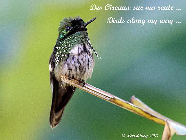 Des oiseaux sur ma route