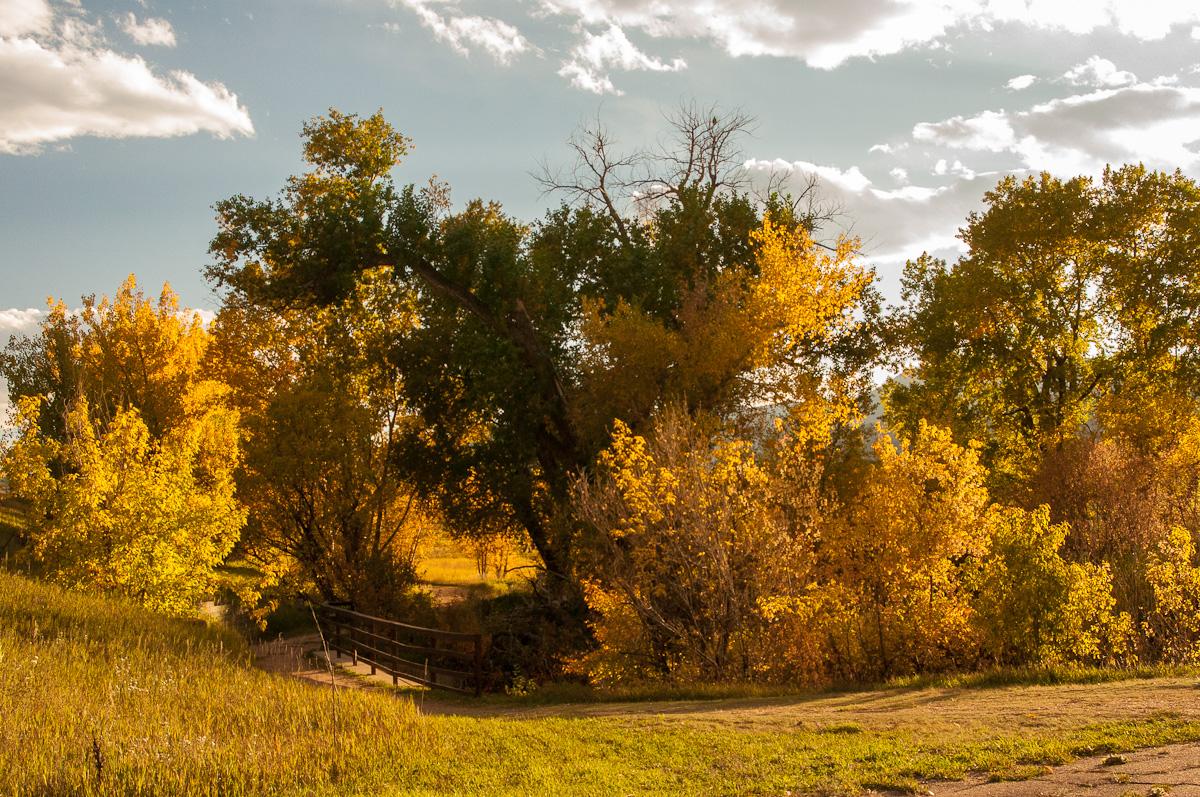 A Tree Falling: Denver Botanic Gardens at Chatfield: October 2012