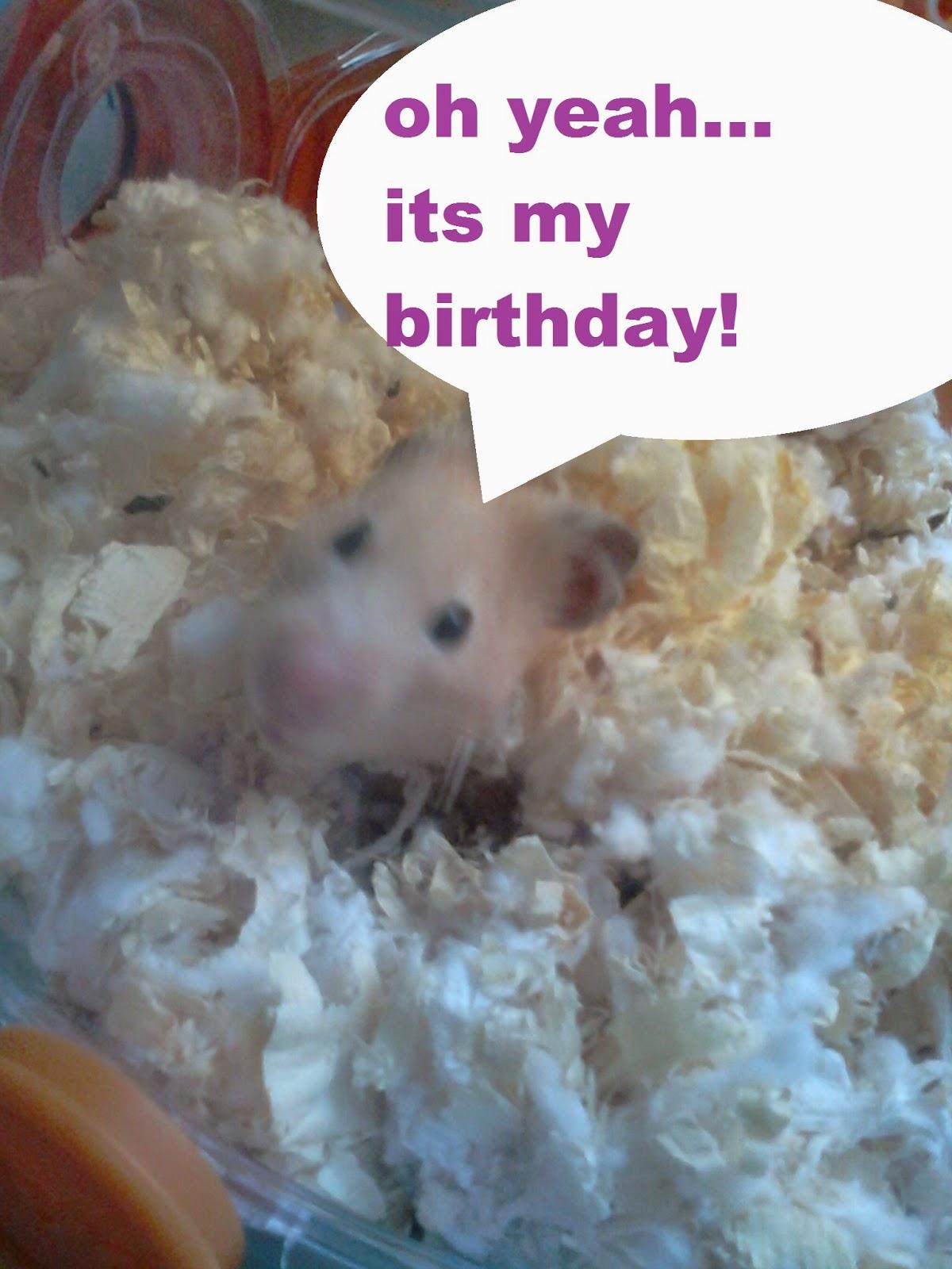 Life Of Hamster Peanuts Birthday