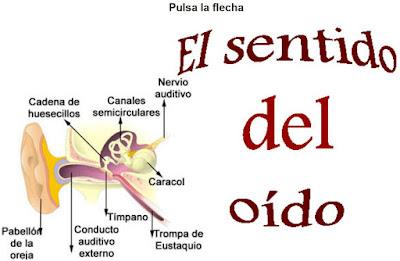 http://cplosangeles.juntaextremadura.net/web/edilim/curso_3/cmedio/los_sentidos_3/el_oido/el_oido.html