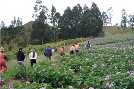 LA PLANTA PROCESADORA DE PAPA Y EL FUTURO AGRICOLA DE HUASAHUASI