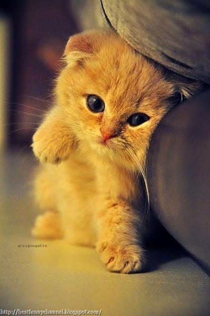 Nice red kitten.
