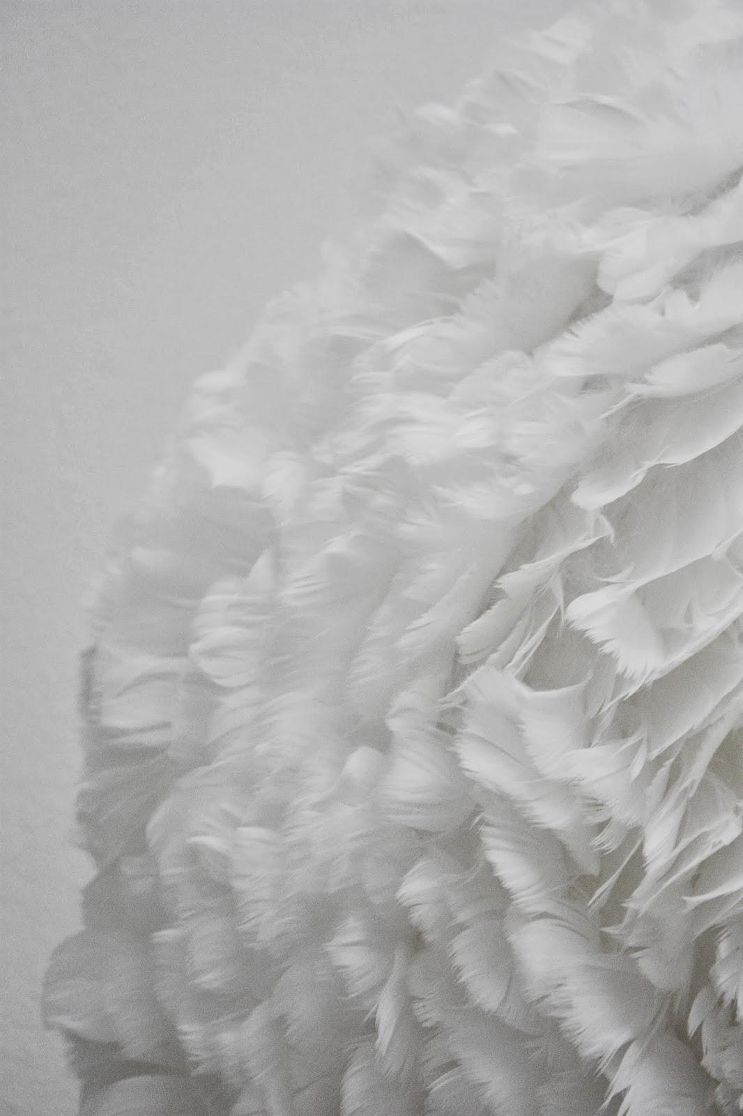 Paulaspalats: om en härlig, fluffig skapelse