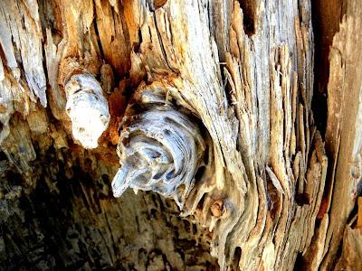 Bonsai center sopelana desde bilbao hasta donde tu quieras - Acabar con las termitas ...