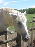 Hopewell Horse