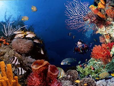 Foto Pemandangan Bawah Laut Terindah Di Dunia 2013