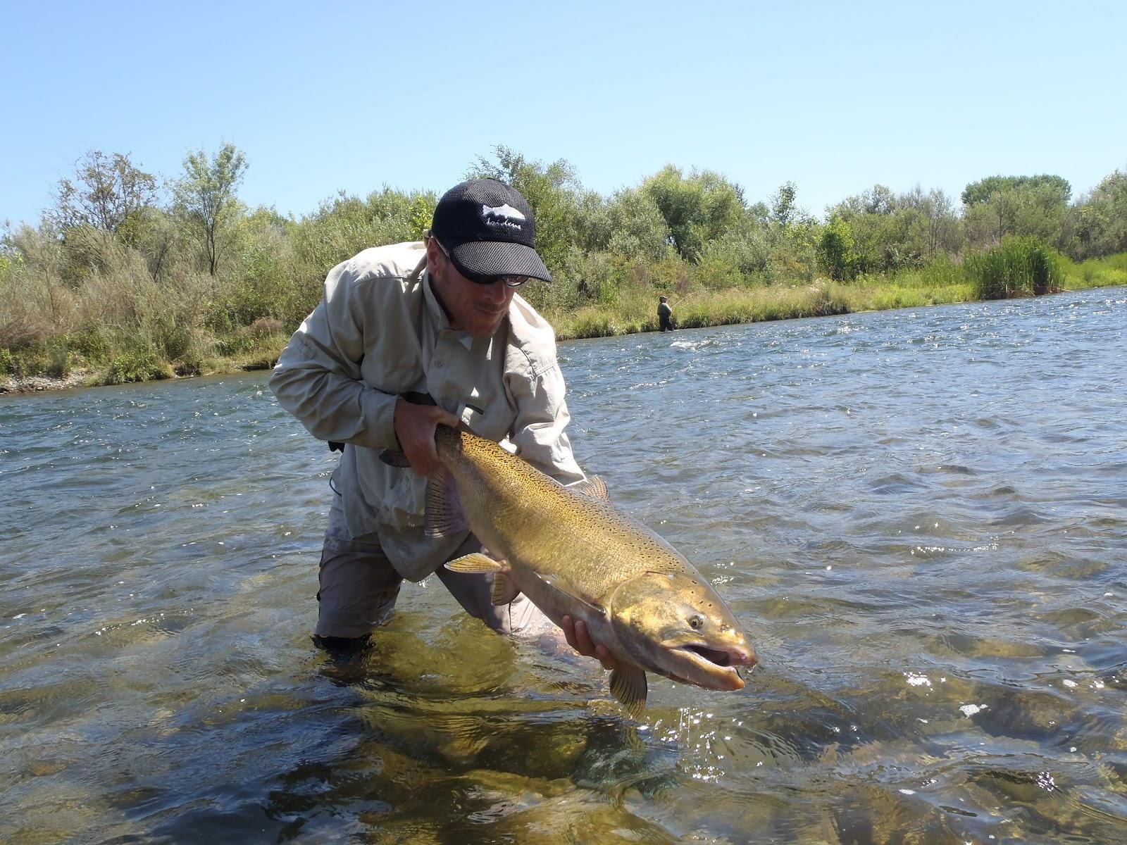 Irideus fly fishing flies for salmon steelhead trout for Wa fly fishing forum