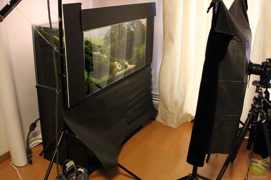 水草レイアウト水槽撮影