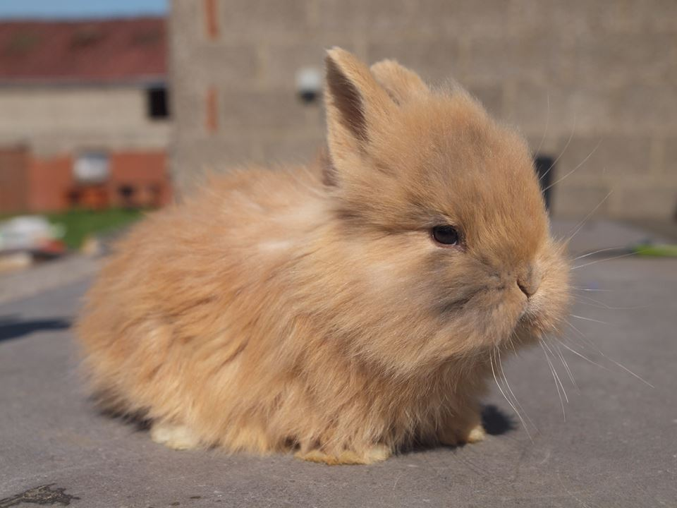 kleine konijntjes
