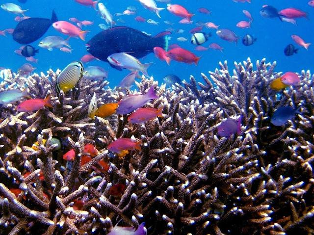 Imag-7_paisaje-natural-peces-melanesia