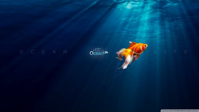 ocean, life, death, desktop wallpaper