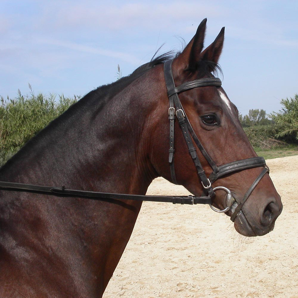 Tienda de hipica y for Accesorios para caballos