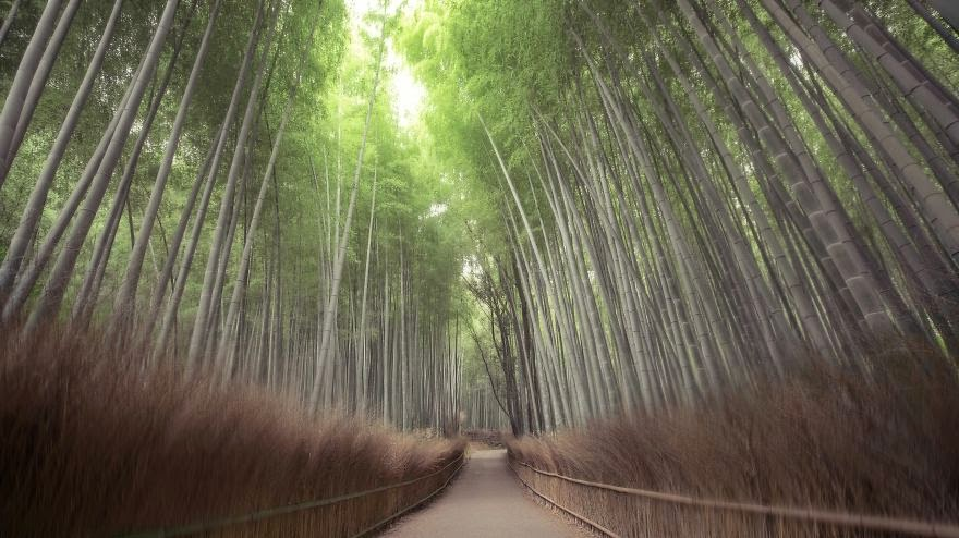 mysterious forests around the world-15