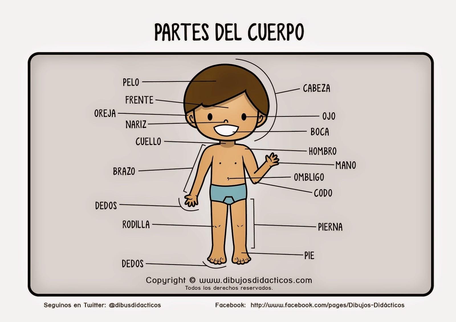 EL CUERPO HUMANO EN EDUCACIÓN INFANTIL: Imágenes y recortables de ...
