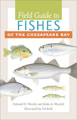 Field Guide to Fishes of the Chesapeake Bay, by Ed Murdy &amp; Jack Musick
