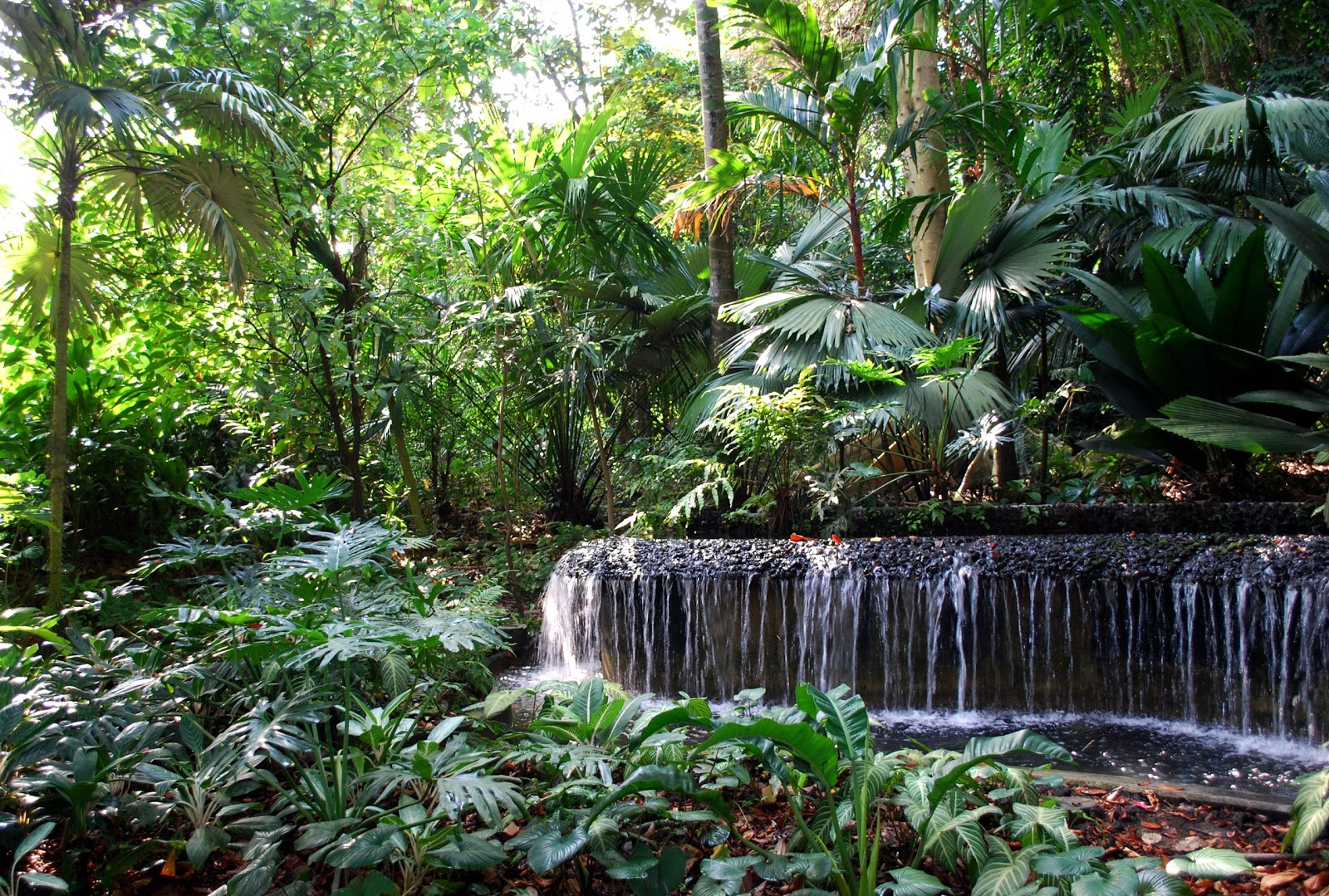 the intercontinental gardener strolling through steamy singapore botanic gardens