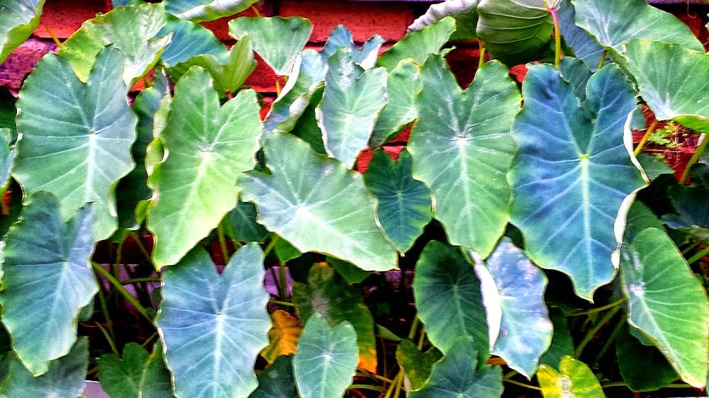 Summer Vegetable Gardening Activities - Capsicums ...