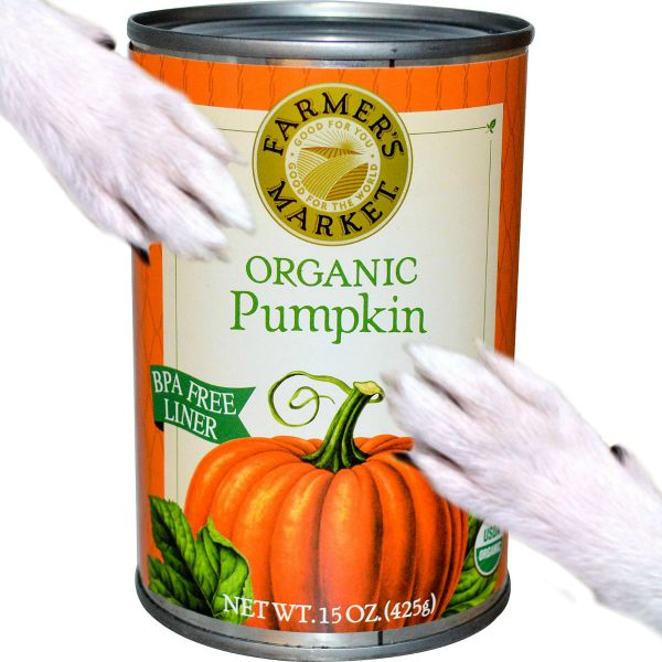 Feeding Canned Pumpkin To Dogs