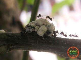 Semut dan Setumpuk Makanan