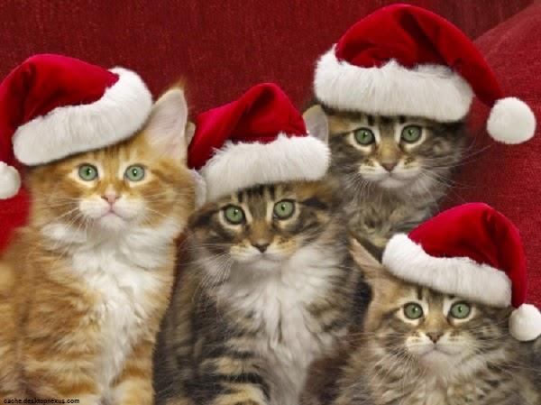 Des chats Fond d'écran noël