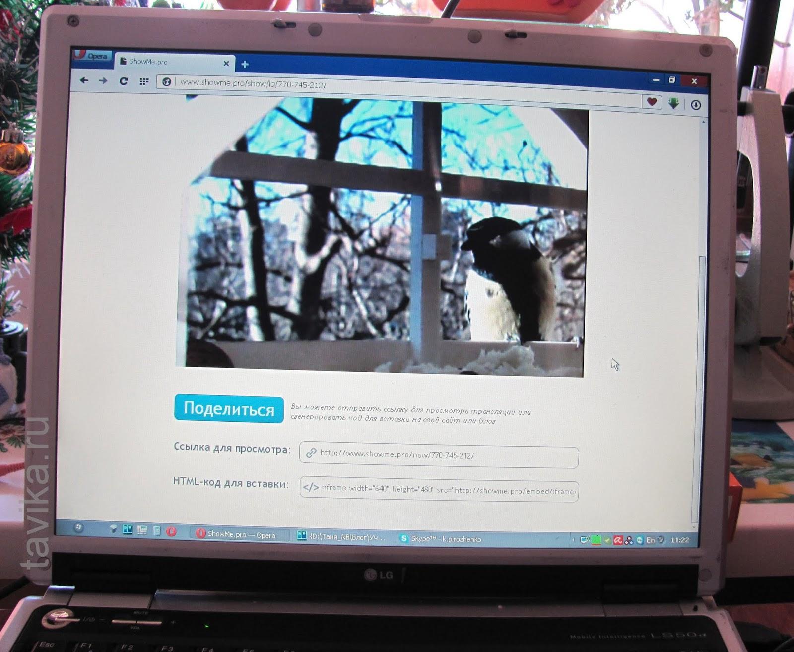 наблюдение за птицами на кормушке с помощью вебкамеры