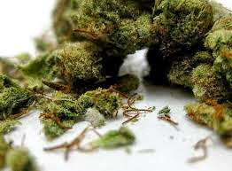 The Healing Power of Marijuana Has Barely Been Tapped Hemp