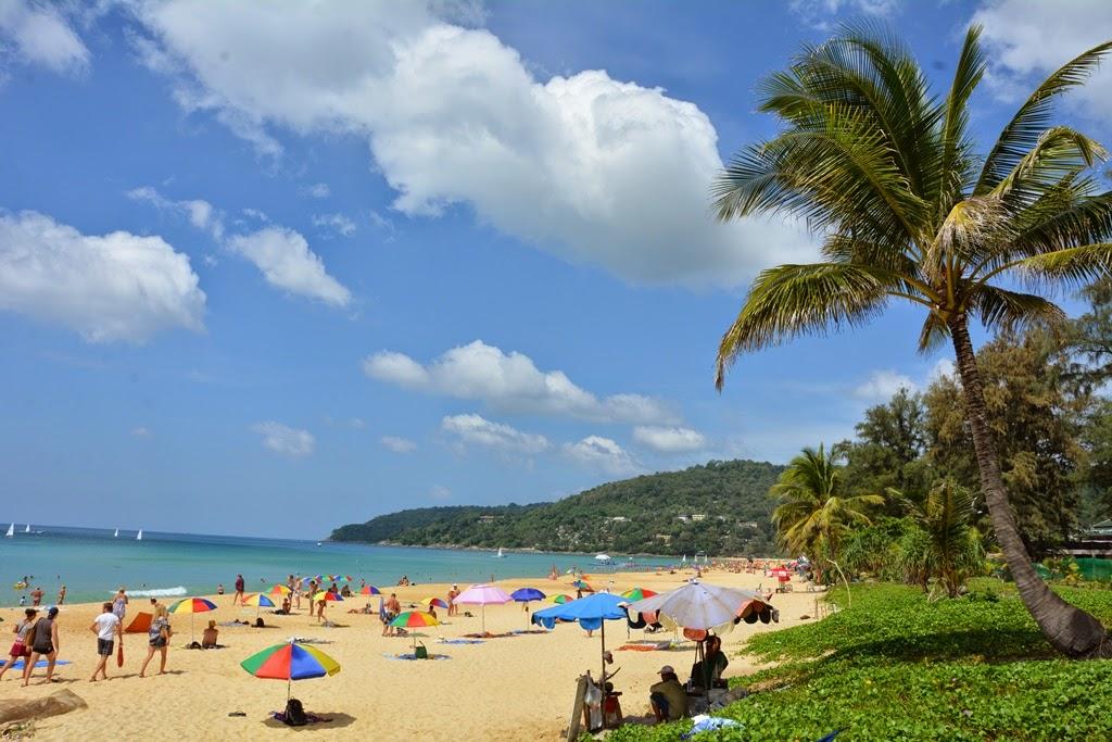 Karon Beach Phuket palm tree