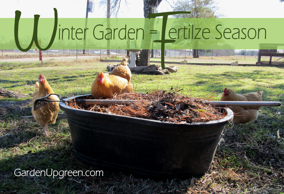 Winter Garden Fertilize Season, shared by Garden Up Green
