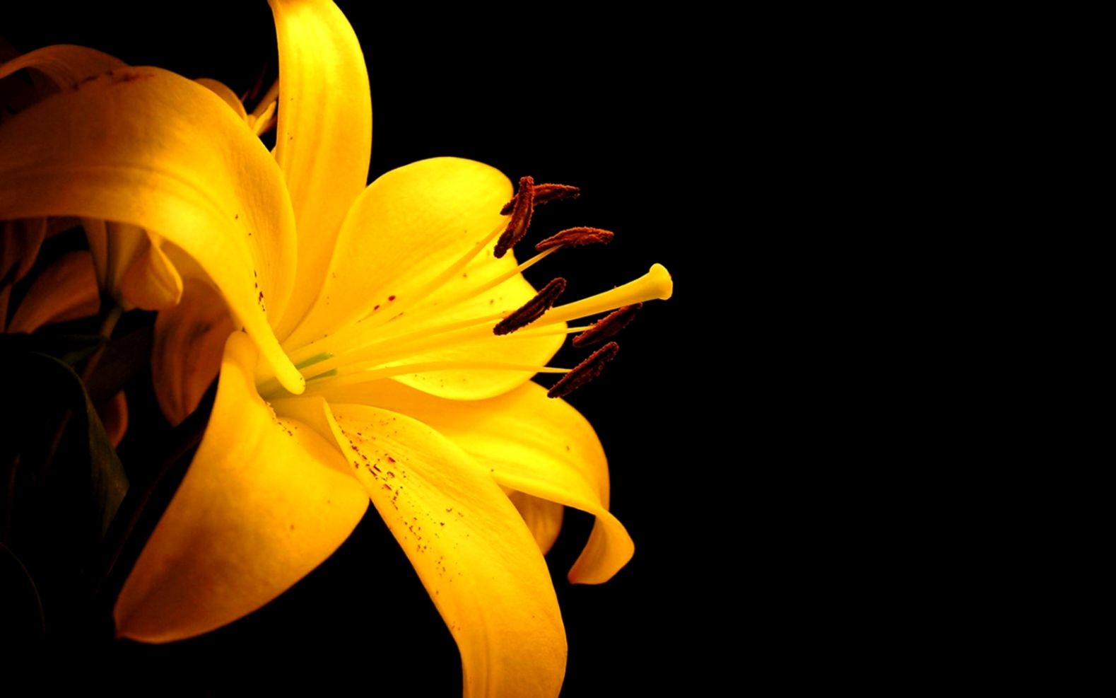 Yellow Flower wallpaper  1680x1050  42588