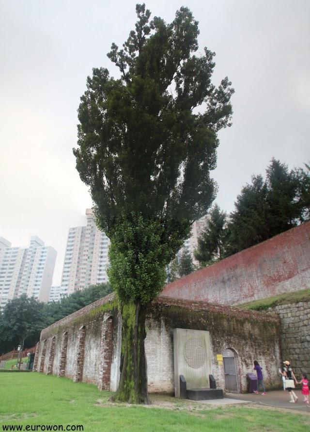 El álamo de los lamentos de la prisión de Seodaemun
