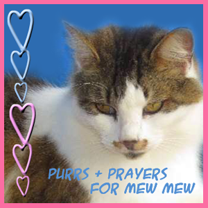 Mew Mew needs our purrs and prayers NOW