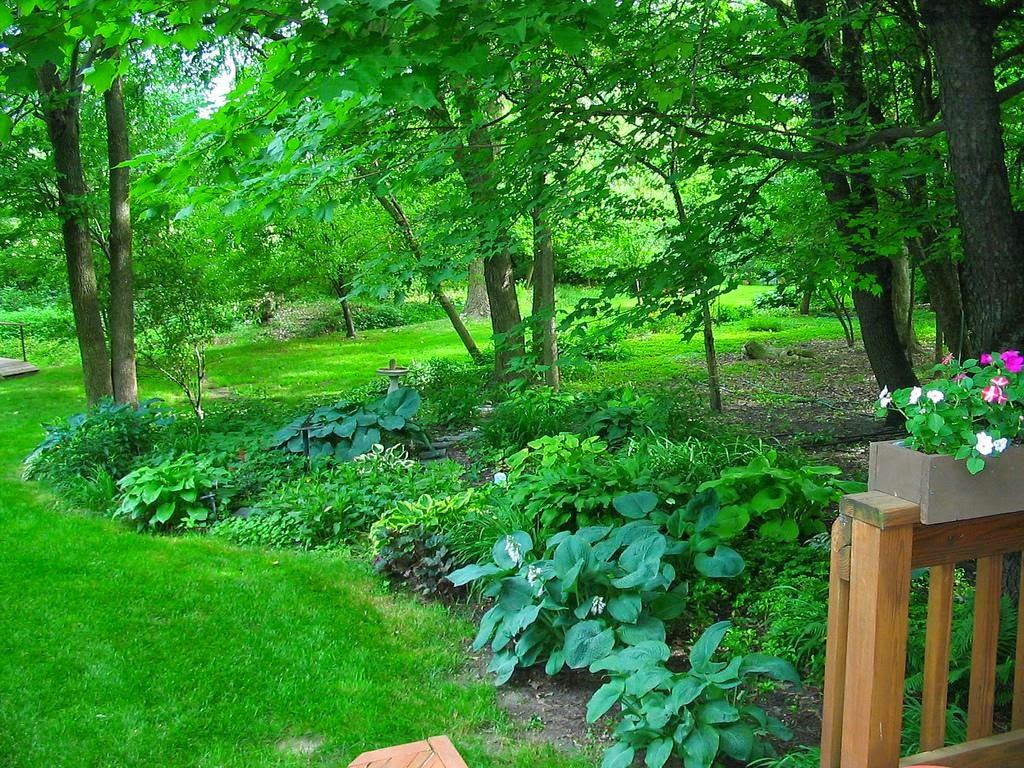 Cultivate create february 2015 for Garden under trees