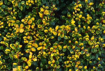 flora wonder blog a garden of winter delights. Black Bedroom Furniture Sets. Home Design Ideas